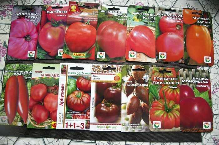 какие помидоры лучше сажать в открытый грунт