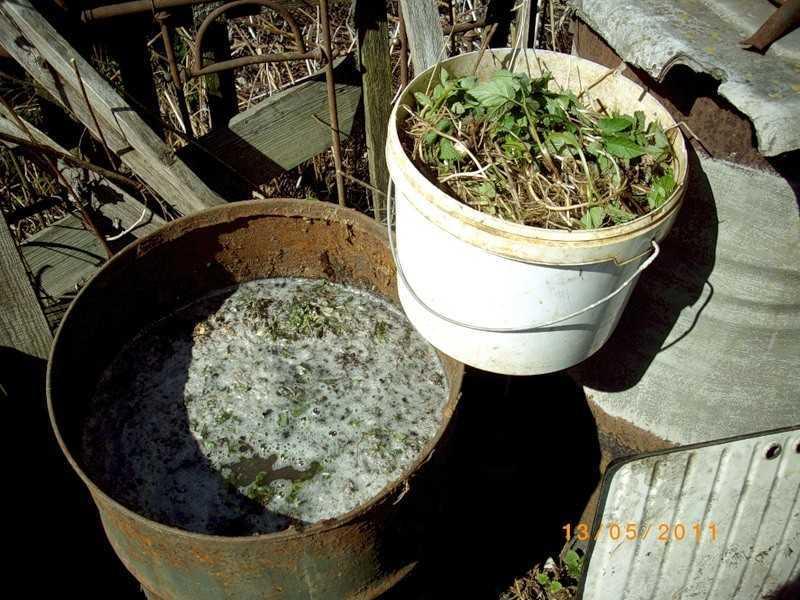 углекислый газ для роста огурцов из забродившей травы