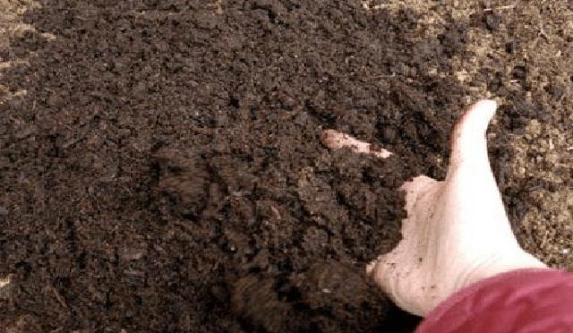 как посадить фасоль в открытый грунт