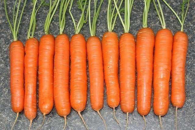урожай моркови с открытого грунта