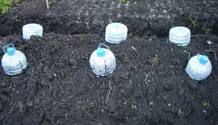 как посадить кабачок в открытый