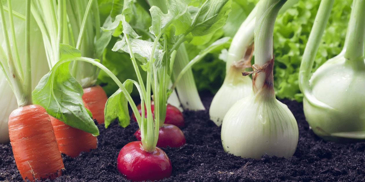 планирование посадок овощей