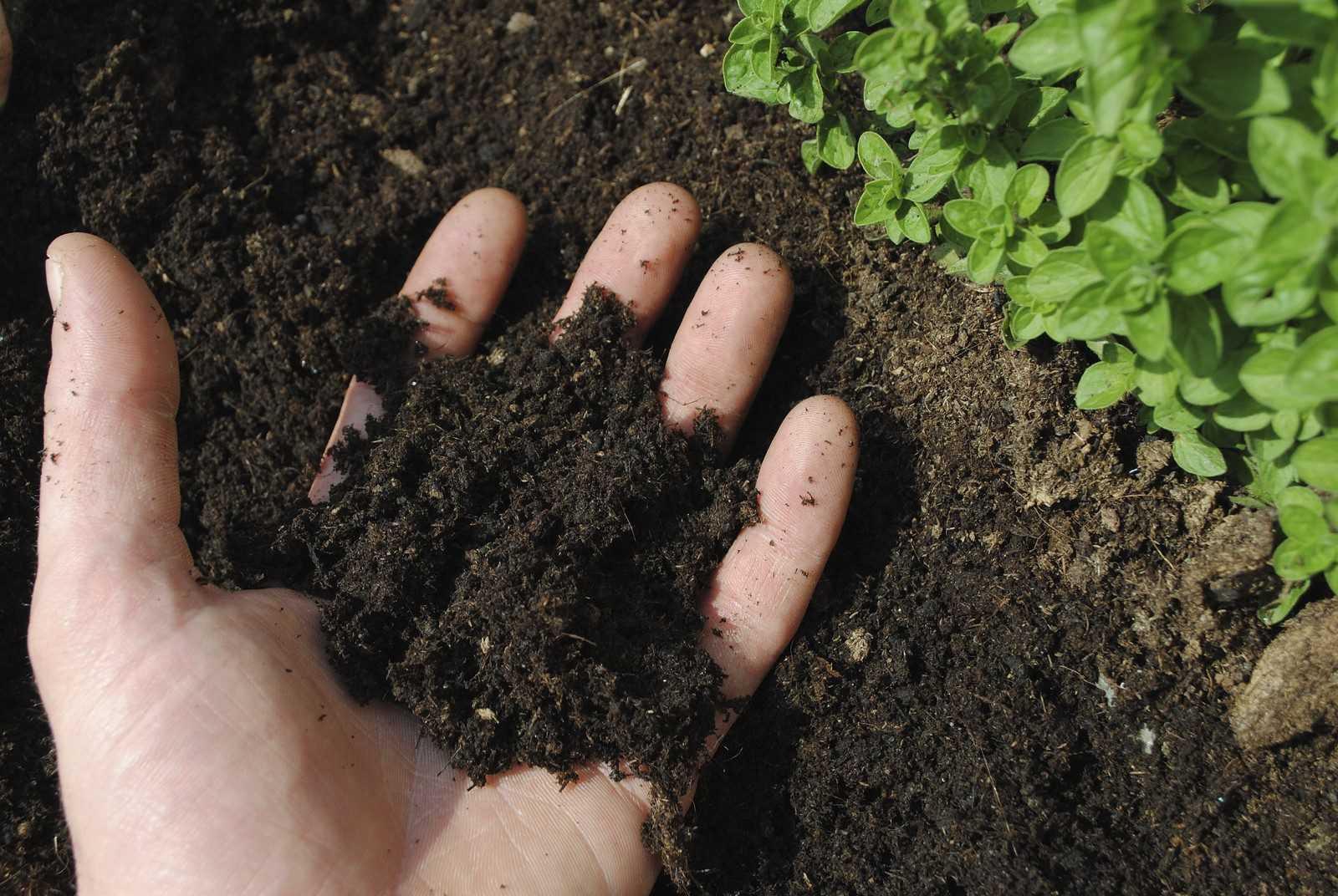 Чем улучшить качество почвы