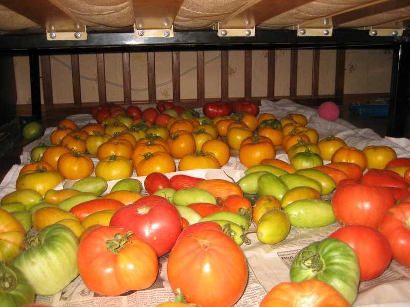 способы продления хранения помидор