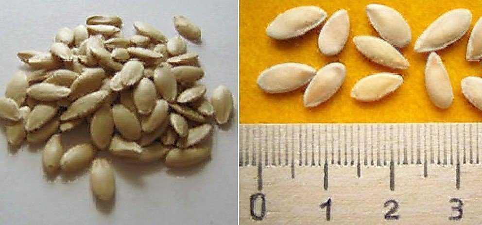собственные семена