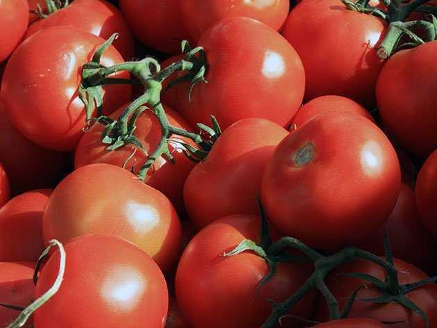 томаты длительного хранения