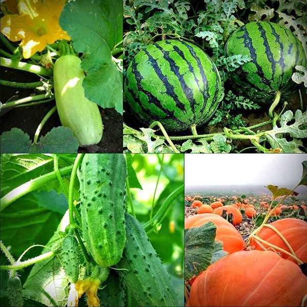овощи которые можно сажать после свеклы