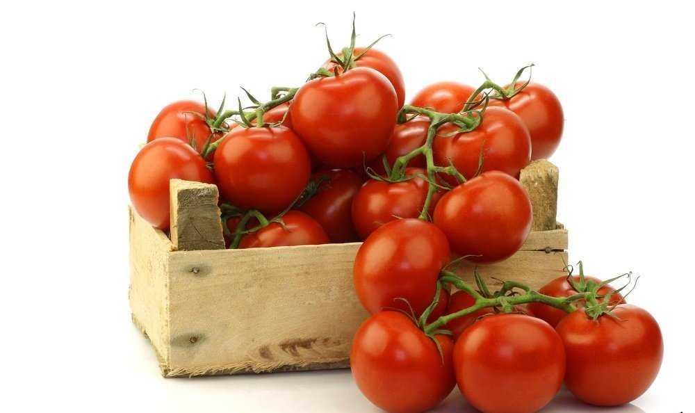 урожай спелых помидор