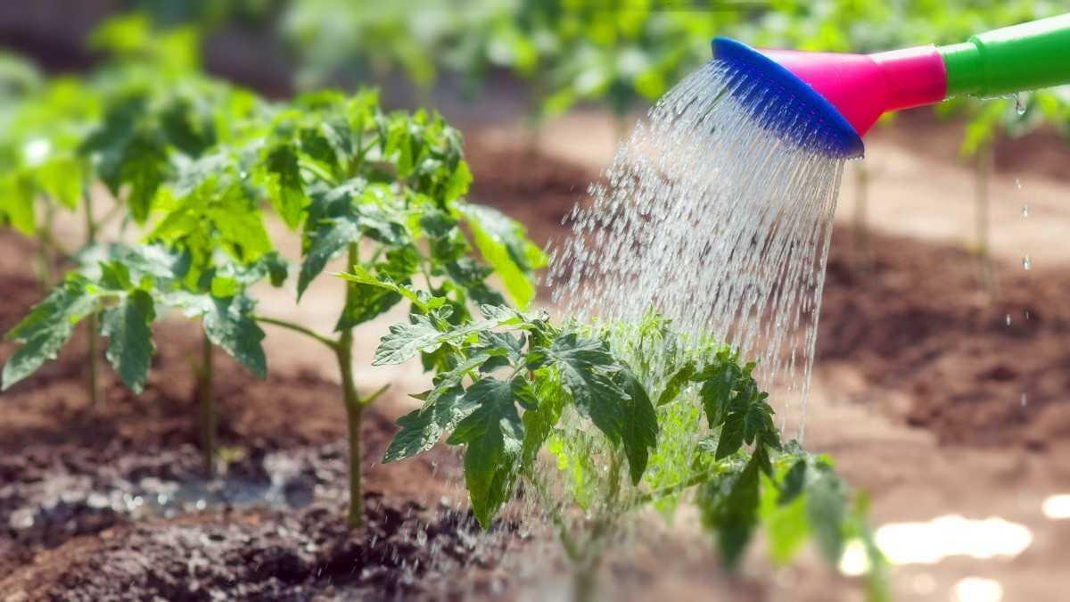 чтобы полить огород нужен