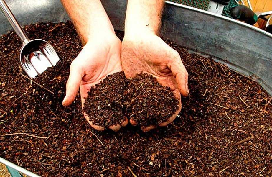 органические удобрения для цветной капусты