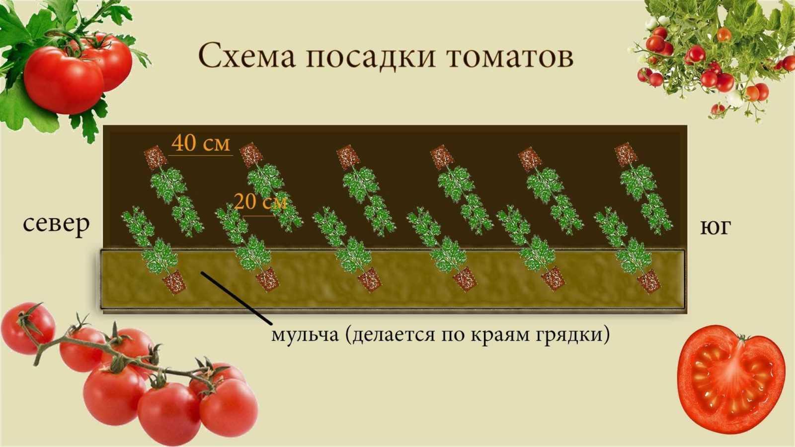 на какое расстояние садить помидоры