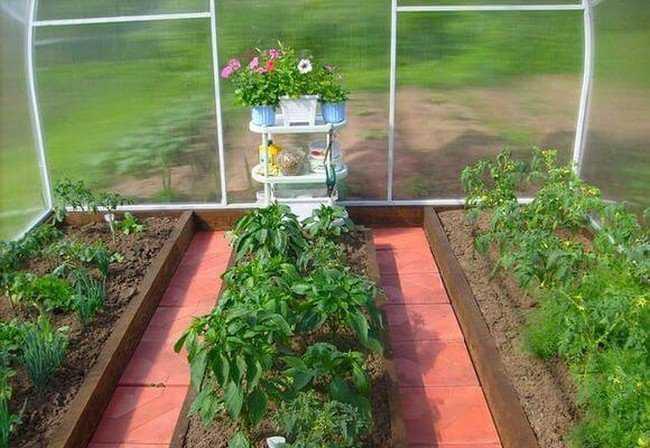 перец и помидоры в теплице сажают вместе