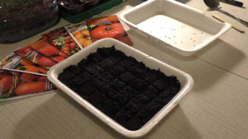 как правильно сажать рассаду помидор