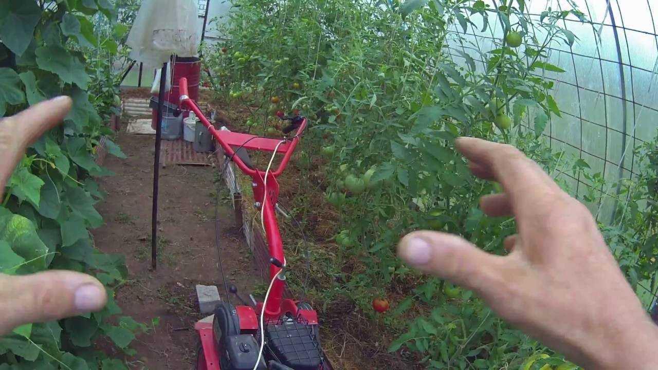 теплица вырастить помидоры огурцы
