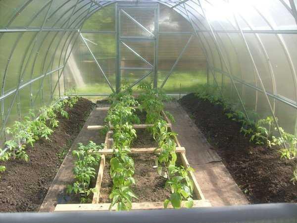 что сажать вместе с помидорами в теплице