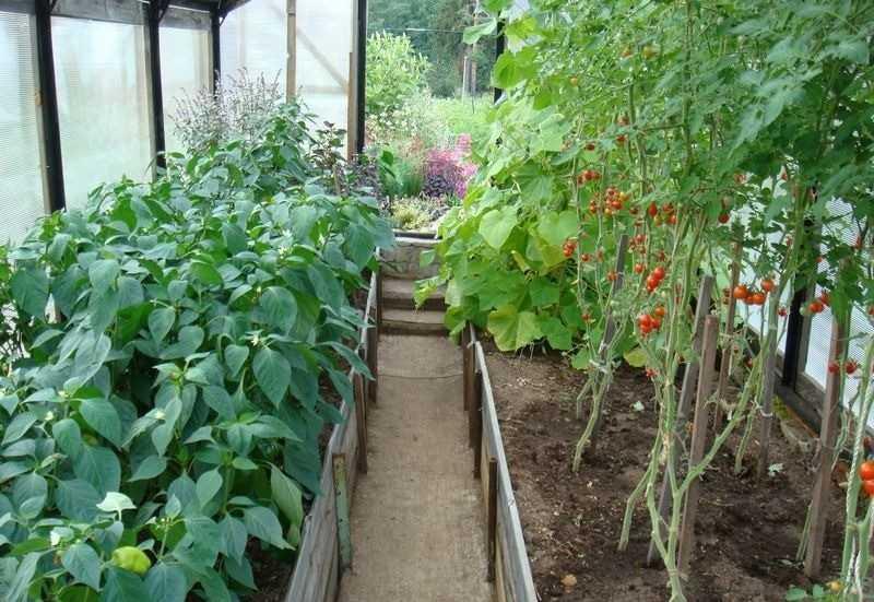 что можно сажать в теплицу с помидорами