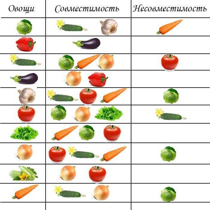 можно сажать огурцы после томатов