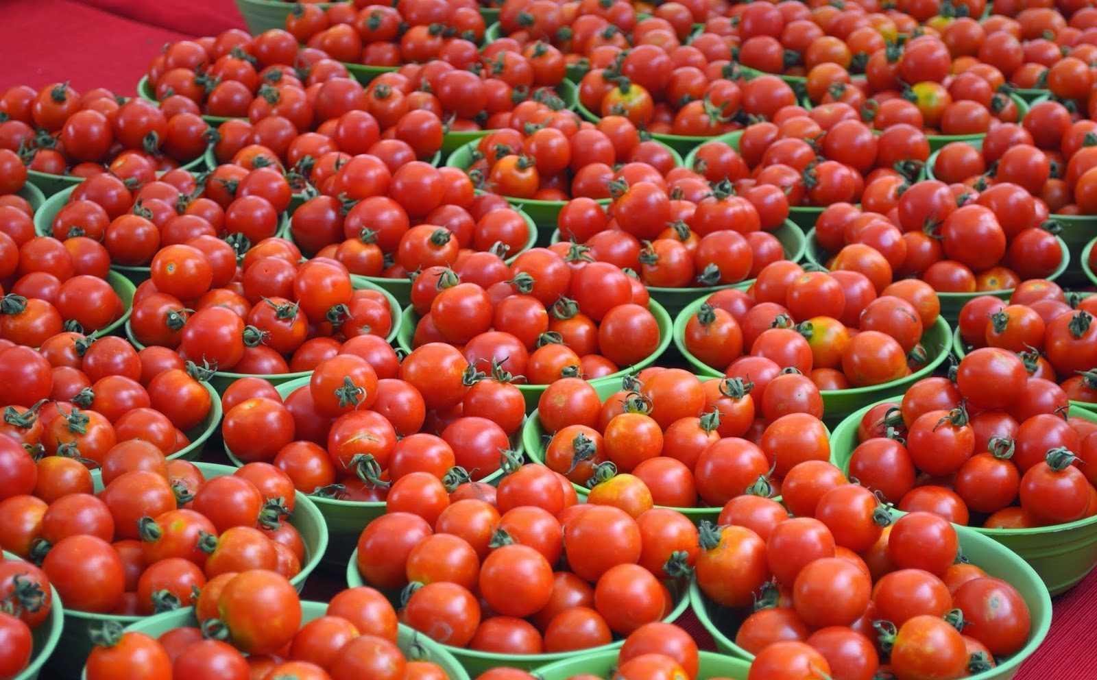 урожайные помидоры