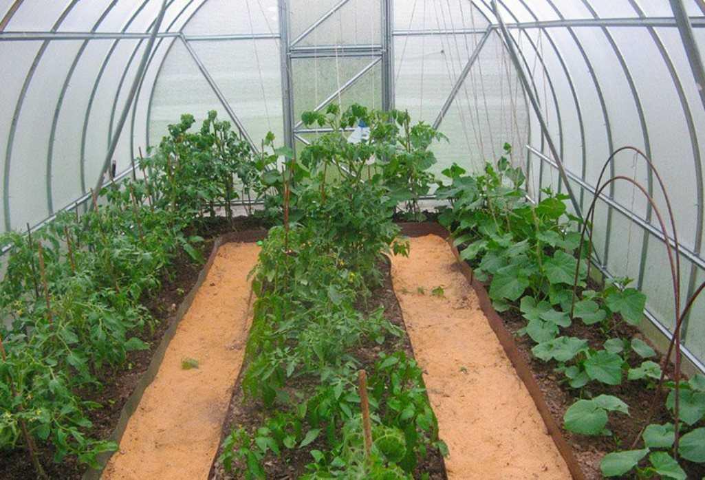 как посадить огурцы помидоры и перец