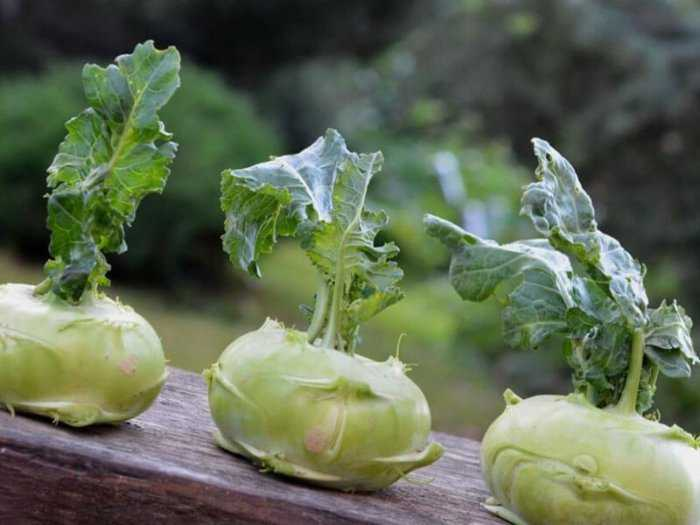 капуста кольраби выращивание уход