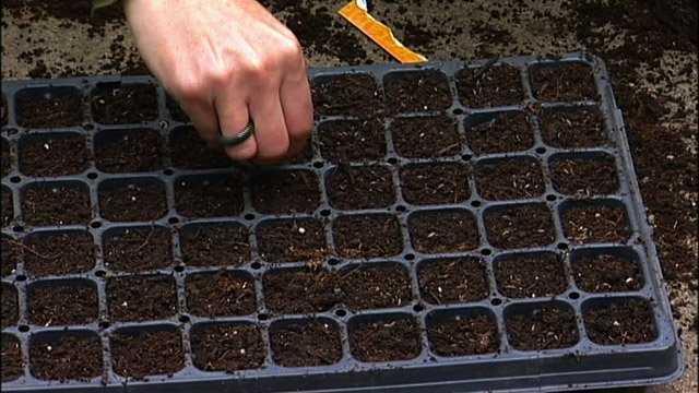 савойская капуста выращивать