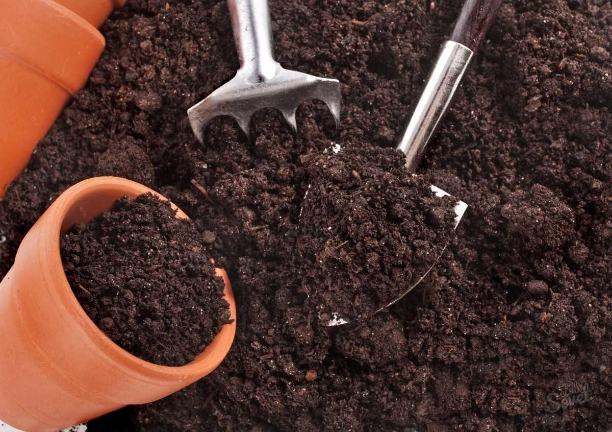 как подготовить почву к посадке помидор