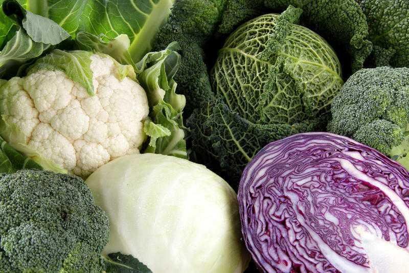 урожайные сорта белокочанной капусты