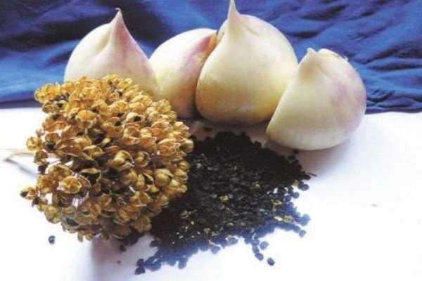суворовский лук как сажать