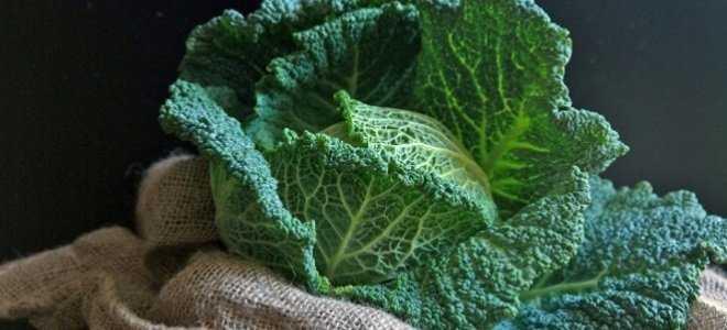как хранить савойскую капусту зимой