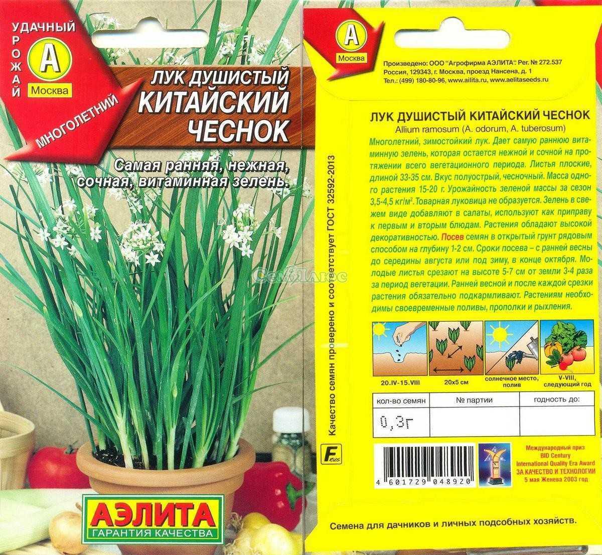 лук душистый пикантный выращивание из семян