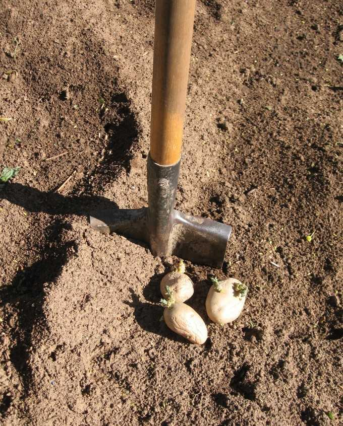 на какую глубину надо сажать картофель