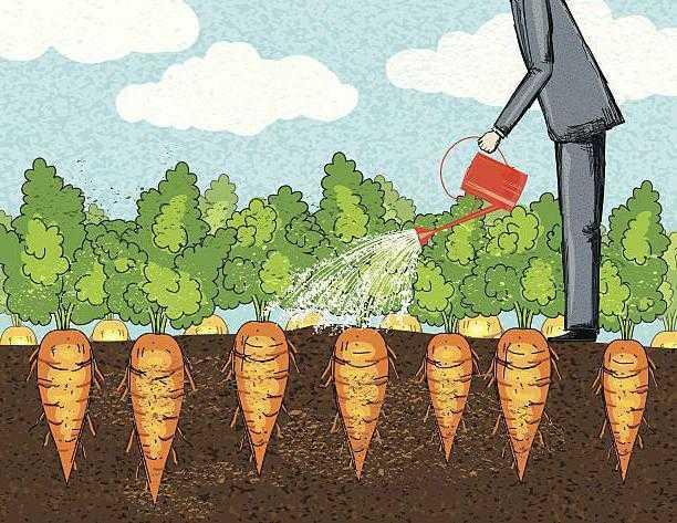 как часто надо поливать морковь