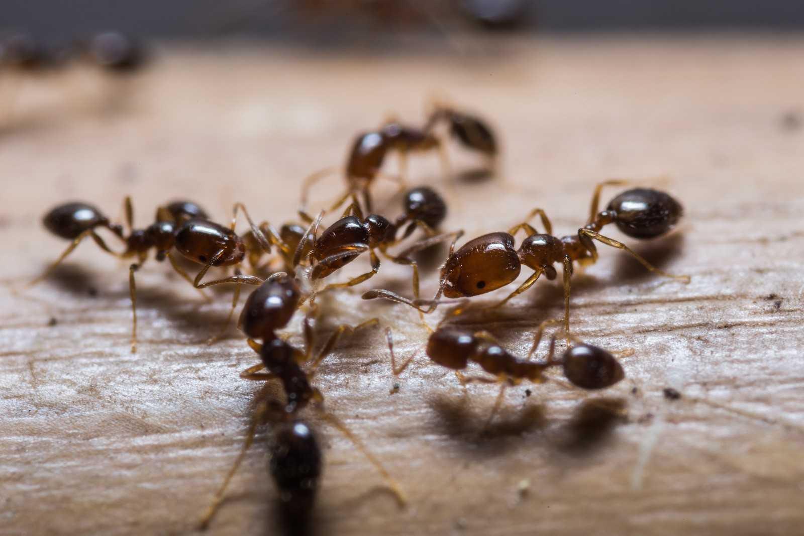 Одолели муравьи? Три простых способа избавиться от них навсегда!