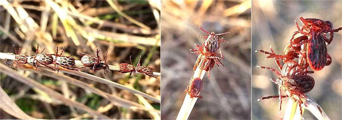 Растения отпугивающие клещей с дачного участка