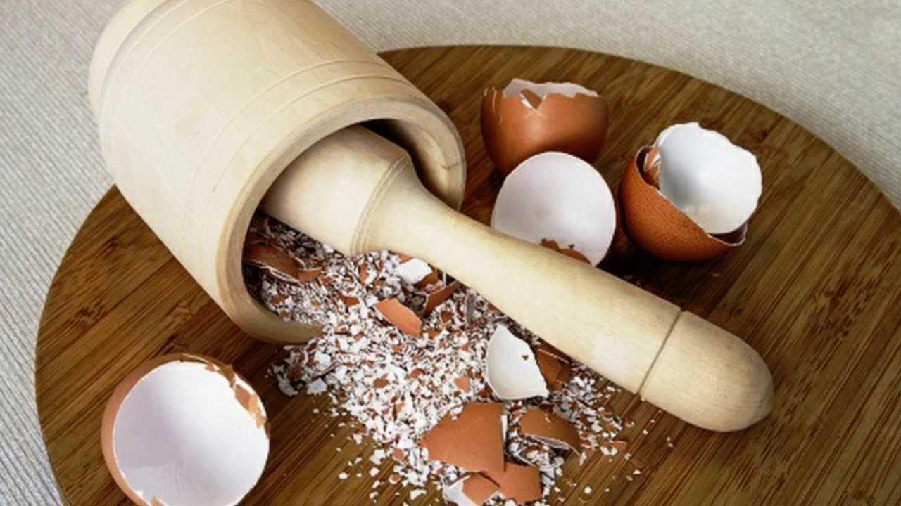 Чем полезна яичная скорлупа на грядках
