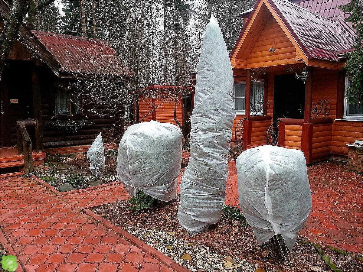 Как сохранить в саду деревья зимой
