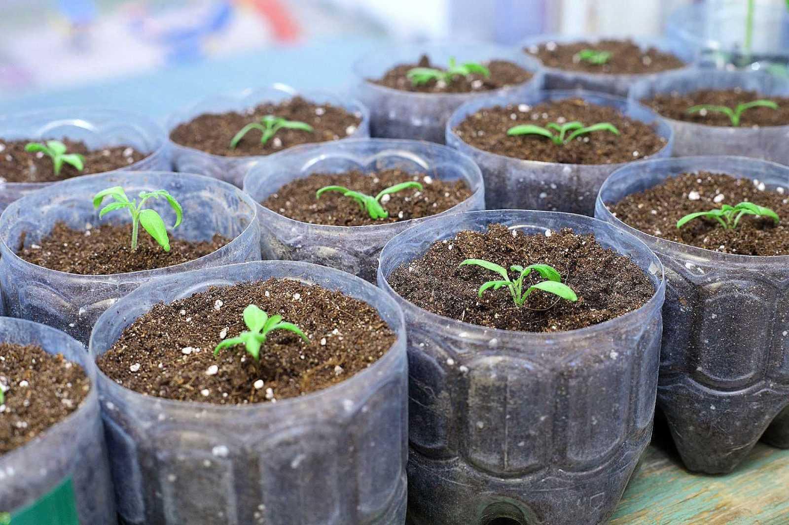Какую пользу приносят растениям дрожжи