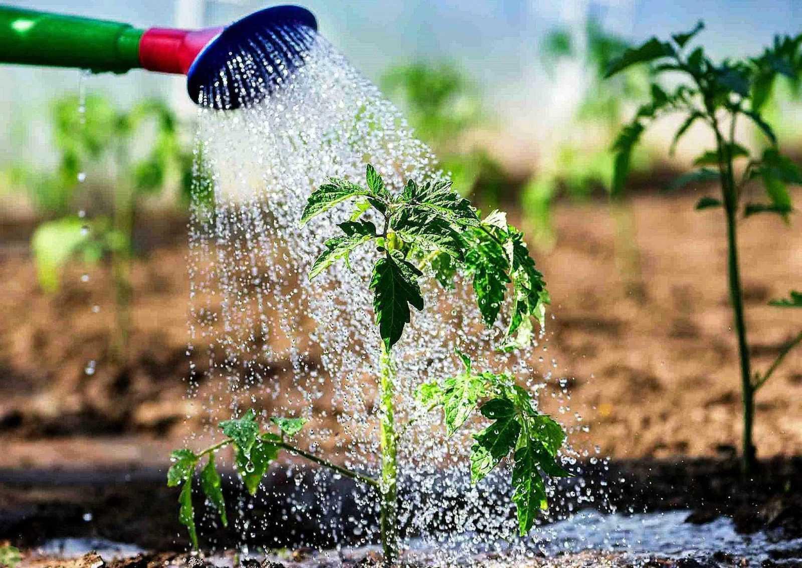 Садовые работы в июле в огороде и дома