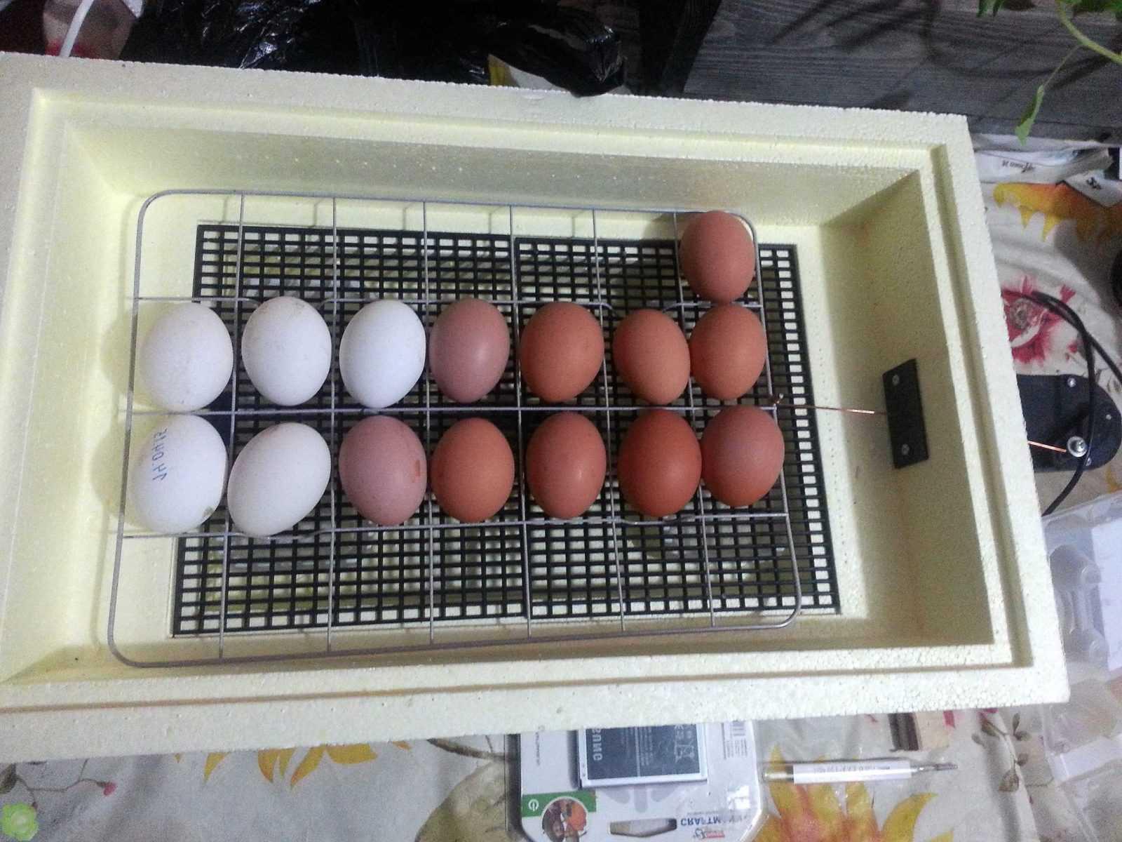 Как и какой выбрать инкубатор для яиц