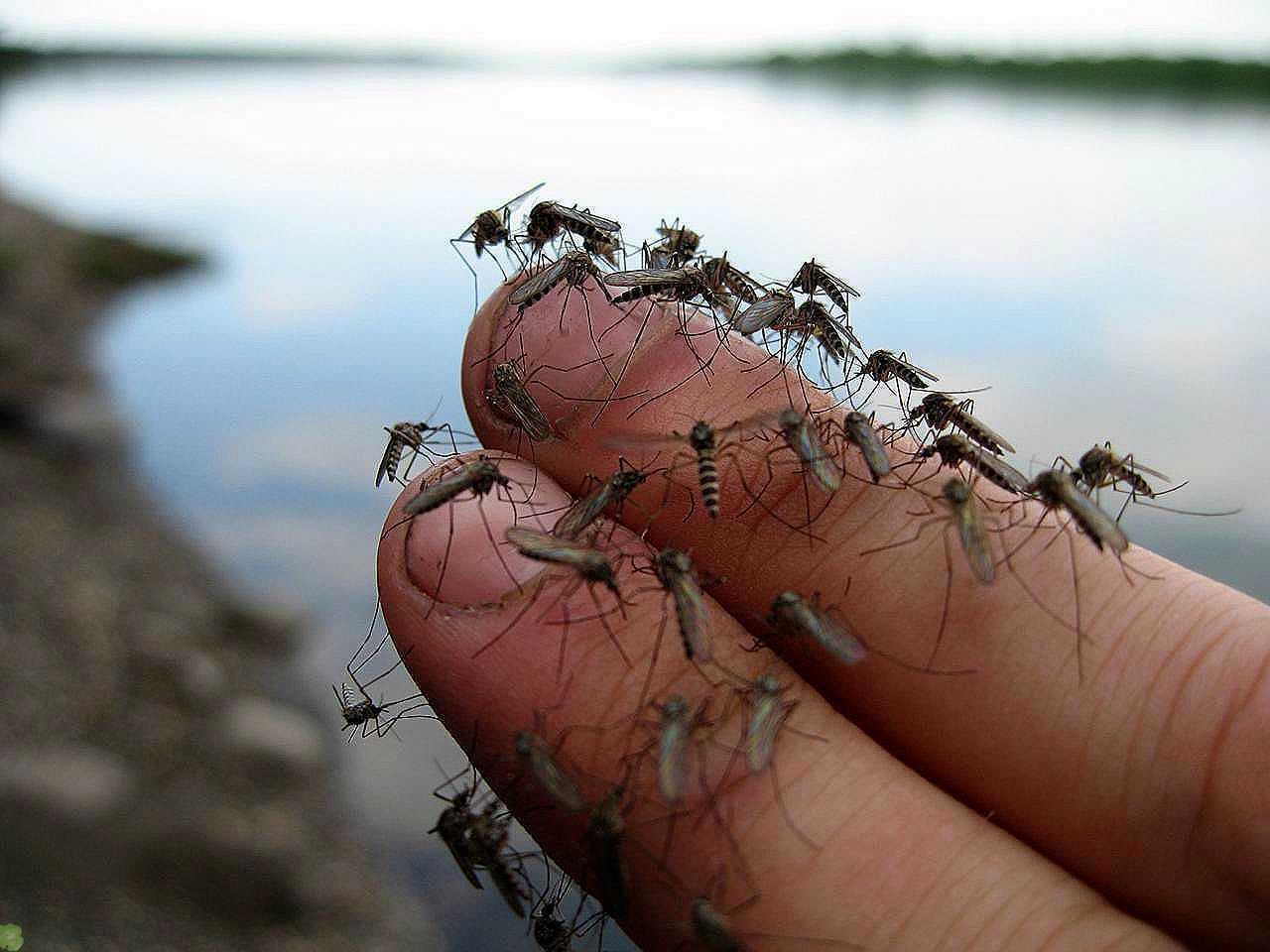 Боремся с комарами на даче с помощью самодельной ловушки