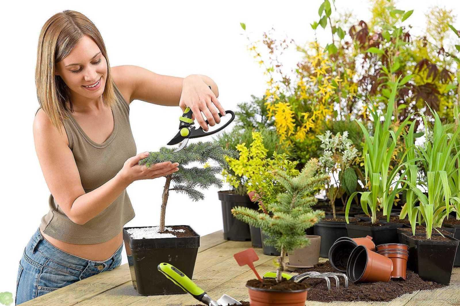 Уход за комнатными растениями, вредители и болезни