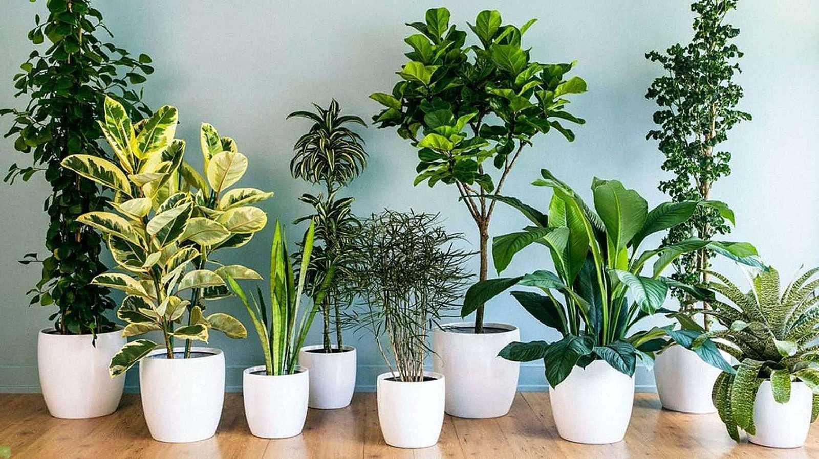 Чем полезны комнатные растения в доме