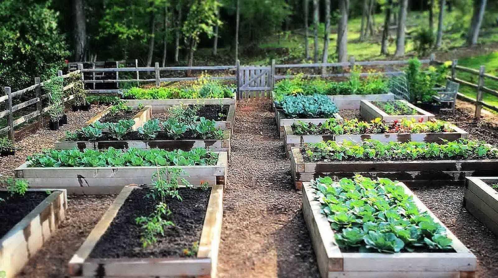 5 советов при планировке огорода