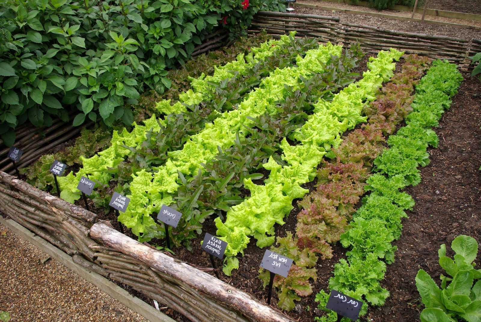 Выращиваем правильную зелень