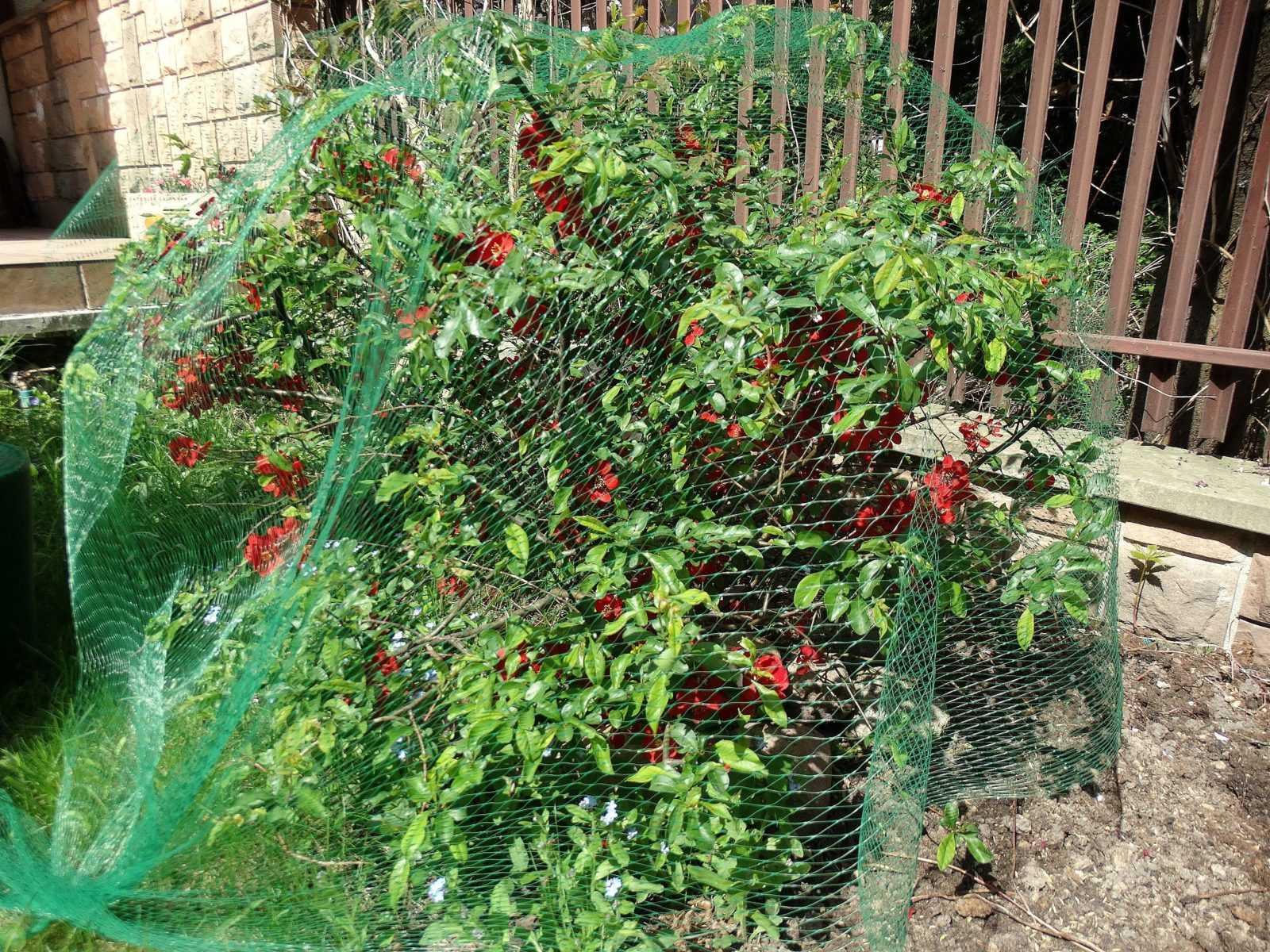 Как защитить ягоды от птиц?