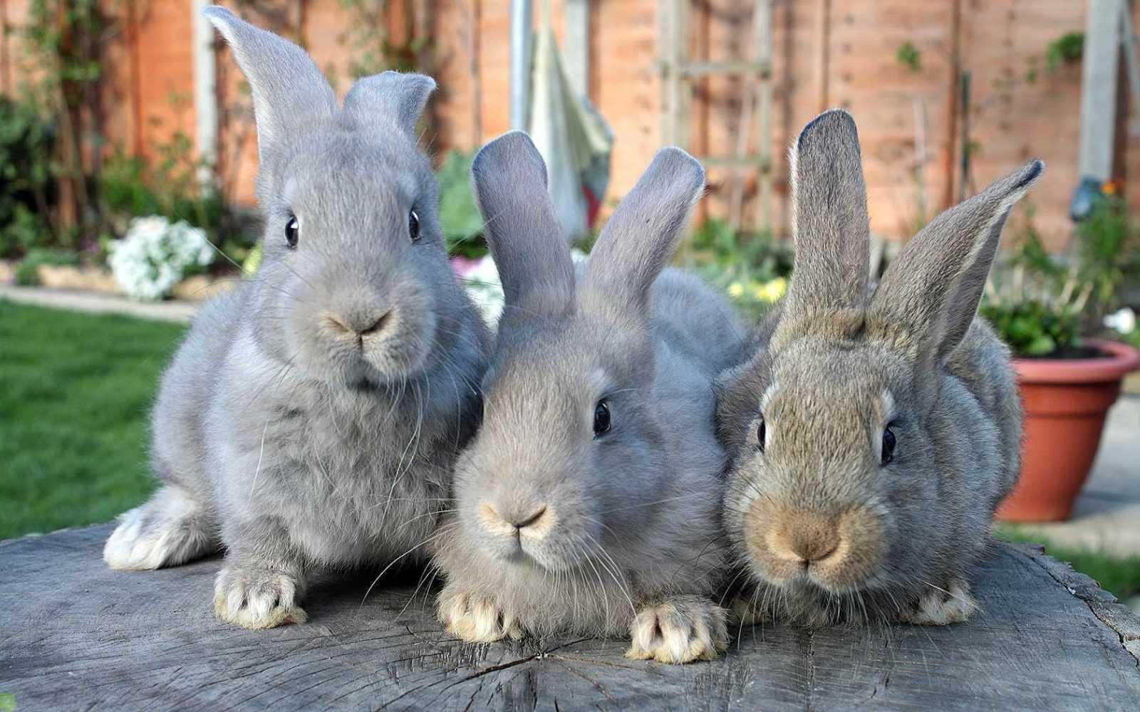 Древнейший способ содержания кроликов - его преимущества и недостатки