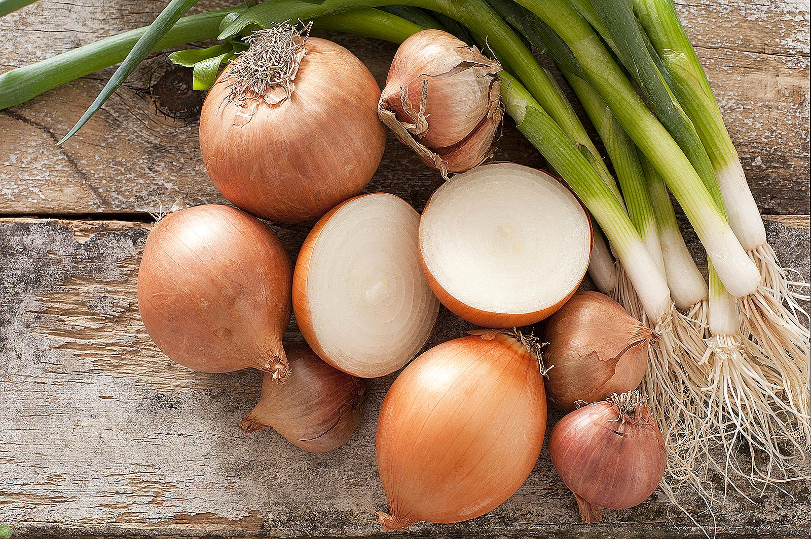 Какие свойства имеет лук и как его выращивать в огороде