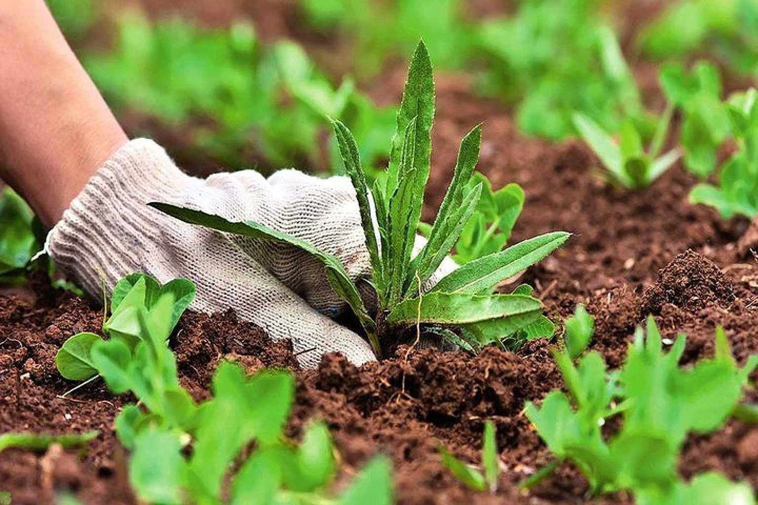 Сорняки способны «подсказать» места для посадки огородных растений