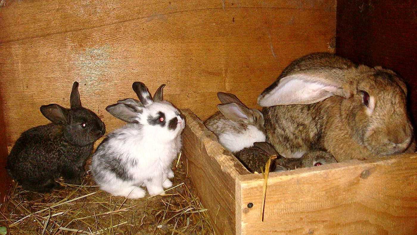 Рацион питания кроликов