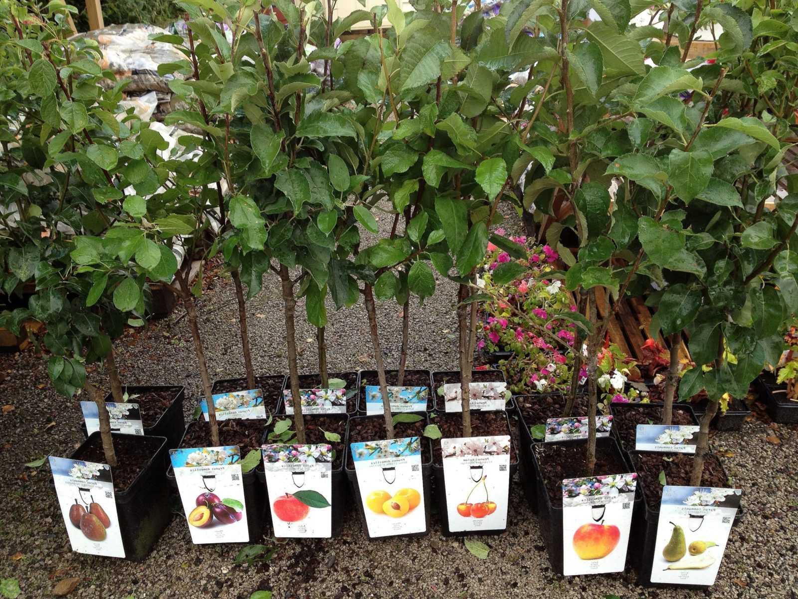 Весенняя покупка саженцев – как выбрать растение и сохранить его до посадки